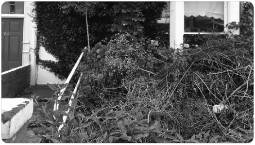 Messy front garden. courtesy of the Virtual Writing Group.